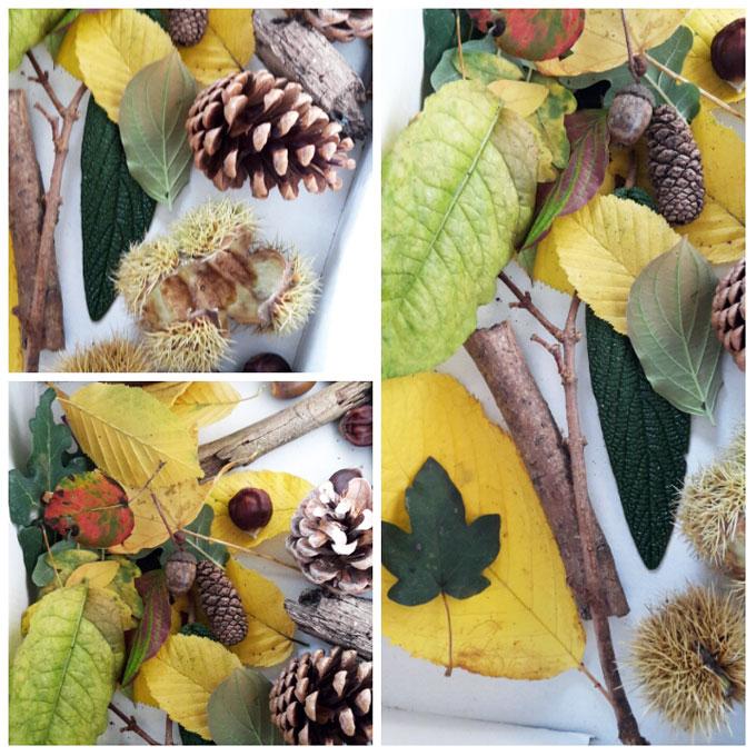 boite-tresor-automne