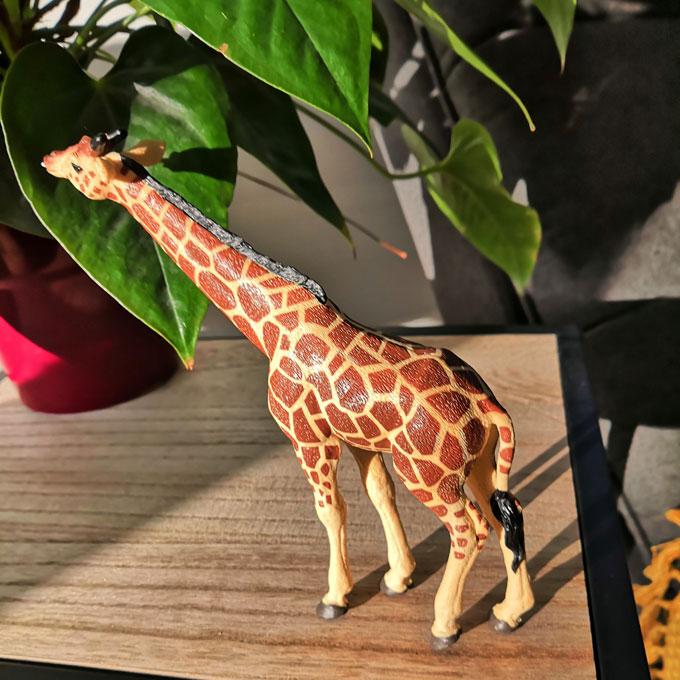 carte-papo-girafe
