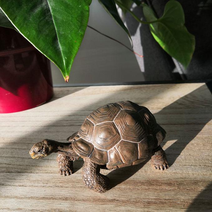 carte-papo-tortue
