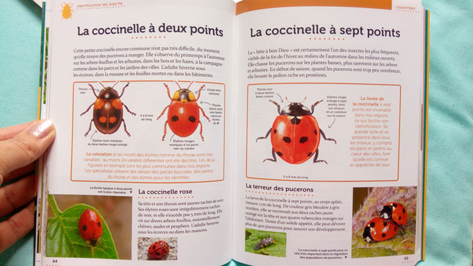 coccinelle 1
