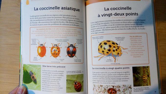 coccinelle-2
