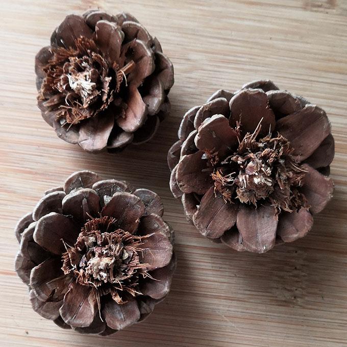 fleur-pomme-de-pin