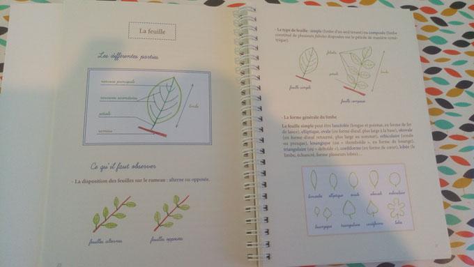 Mon herbier des feuilles d\'arbres… des parcs et des jardins - Plus ...