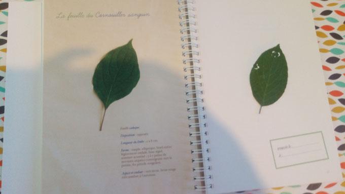 Mon herbier des feuilles d 39 arbres des parcs et des for Mon amaryllis ne fait que des feuilles