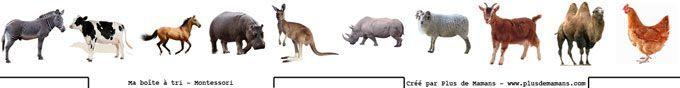 images-boite-de-tri-animaux