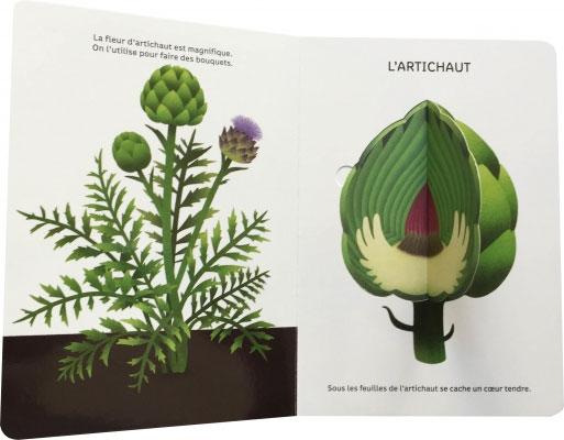 legumes-1