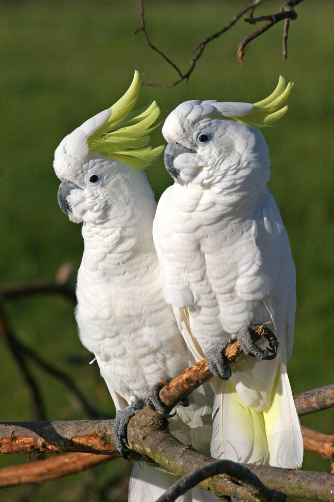 oiseau-parc-oiseau-5